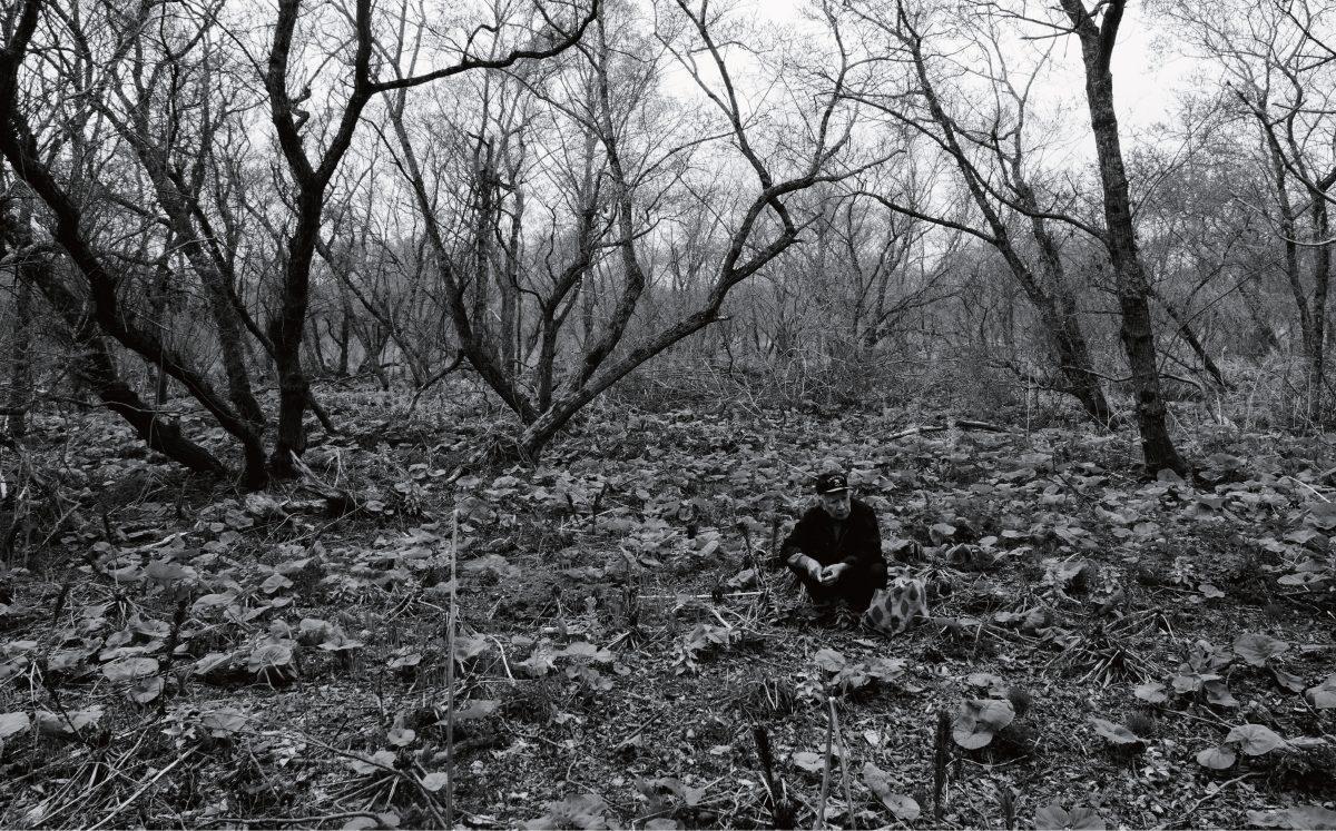 「春の森で」Spring in the Forest